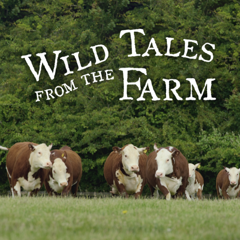 Watch Wild Tales on the Farm narrated by the lovely Hugh Bonneville!